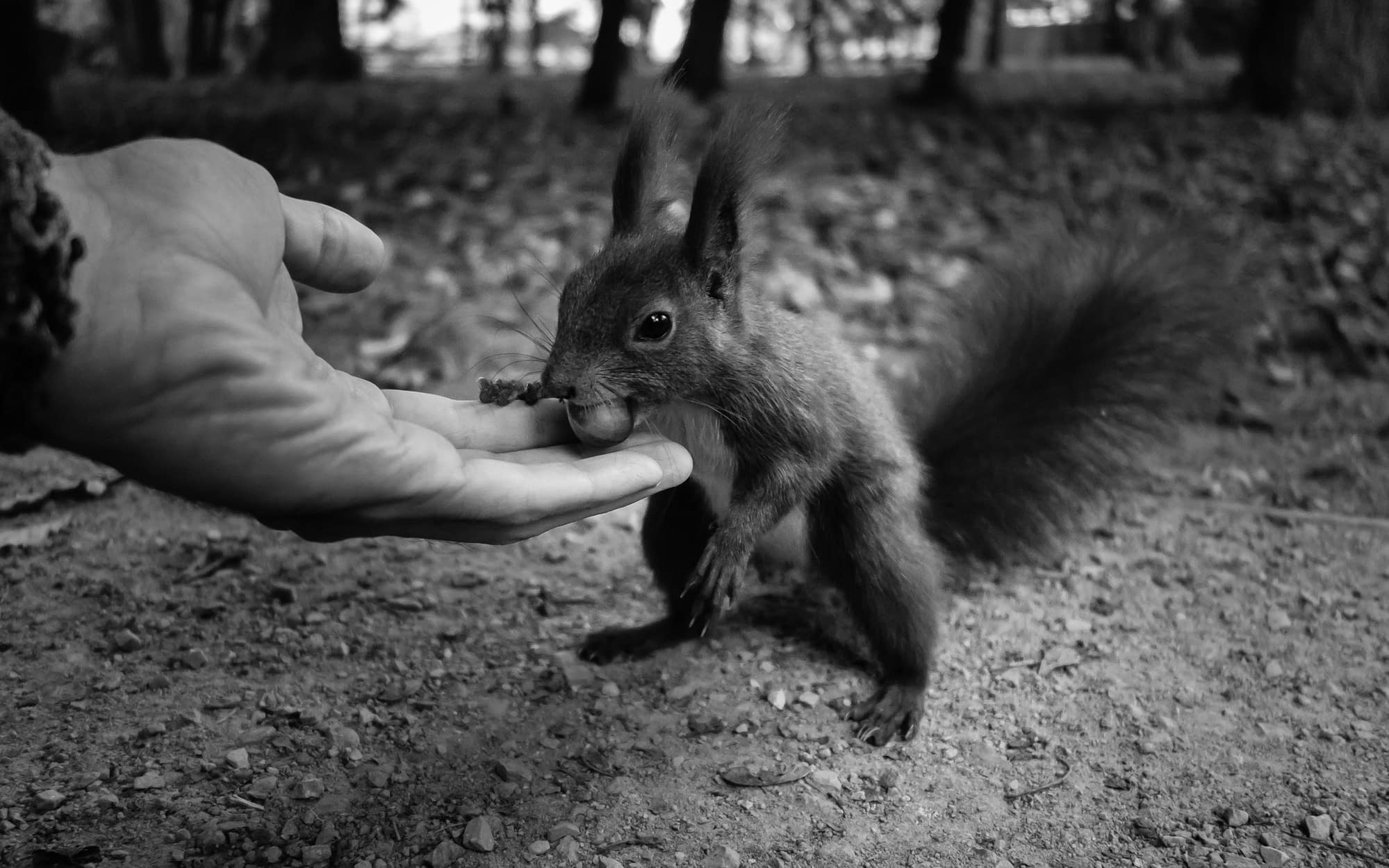 Read more about the article Hand and Squirrel (Hand Gallery Update)