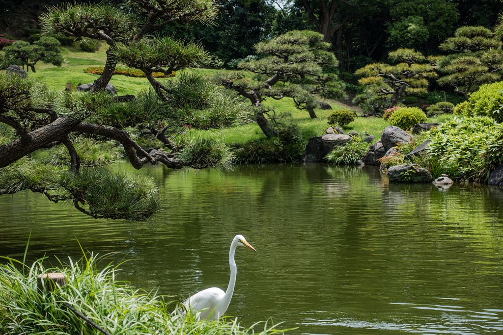 Park in Tokyo, Japan