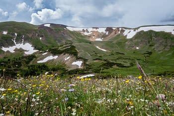 Wildflowers in the Colorado Rockies